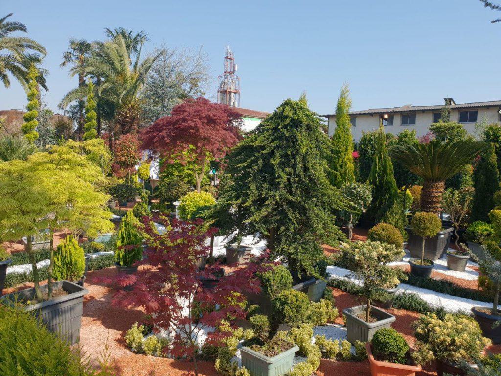 در حاشیه اختتامیه نخستین جشنواره بینالمللی گل و گیاه در چابکسر رودسر