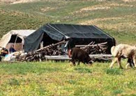 تولید بیش از ۵۰۰۰هزار تن گوشت قرمز و شیر توسط عشایر گیلانی
