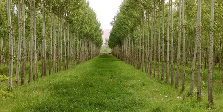 اجرای طرح زراعت چوب در گیلان تکلیفی است