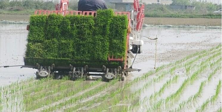 نشای ۴۰ درصدی اراضی شالیزاری گیلان