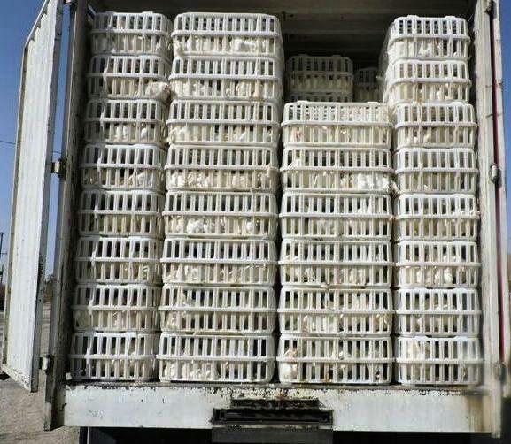 بیش از ۳ تن مرغ فاقد مجوز در آستارا توقیف شدند