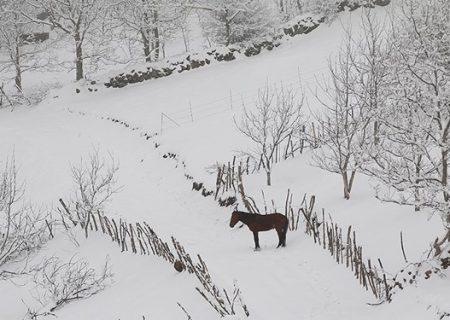استقرار هوای سرد و بارشی طی هفته جاری در گیلان/ارتفاعات استان احتمالا برفی است
