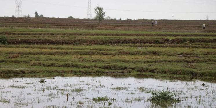 آیا ۹۰ درصد سردهنههای کشاورزی تالش بازسازی شدهاند؟