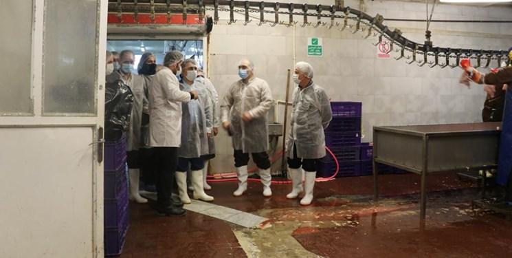 تولید روزانه ۲۲۰ تن گوشت مرغ در رشت