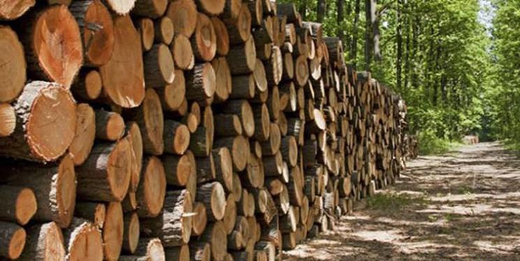 توقف تمامی طرحهای زراعت چوب در گیلان