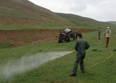 مبارزه جهاد کشاورزی با هجوم ملخها به مناطق مرتفع سیاهکل+فیلم